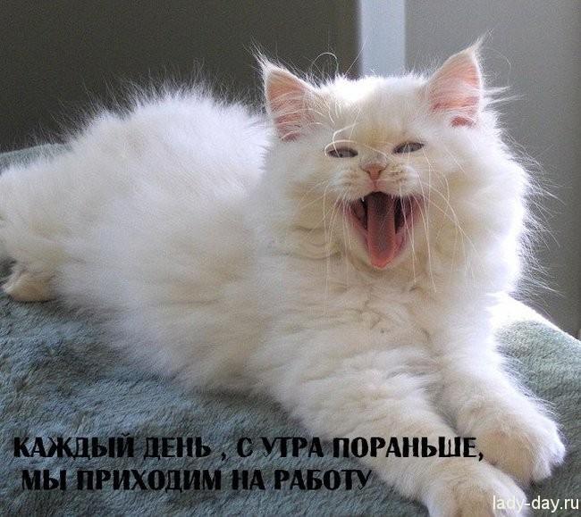 1 ноября что за праздники в россии