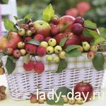 Яблочный Спас, рецепты